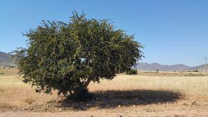 砂漠の国モロッコが生んだアルガンオイルで乾燥肌撃退!